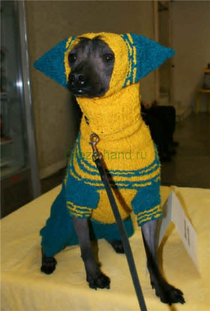 » Вязанная одежда для собак своими руками
