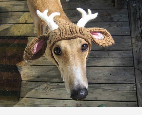 Вязание крючком одежду для собаки